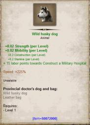 Wild husky dog