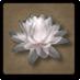 Kwiat_lotosu